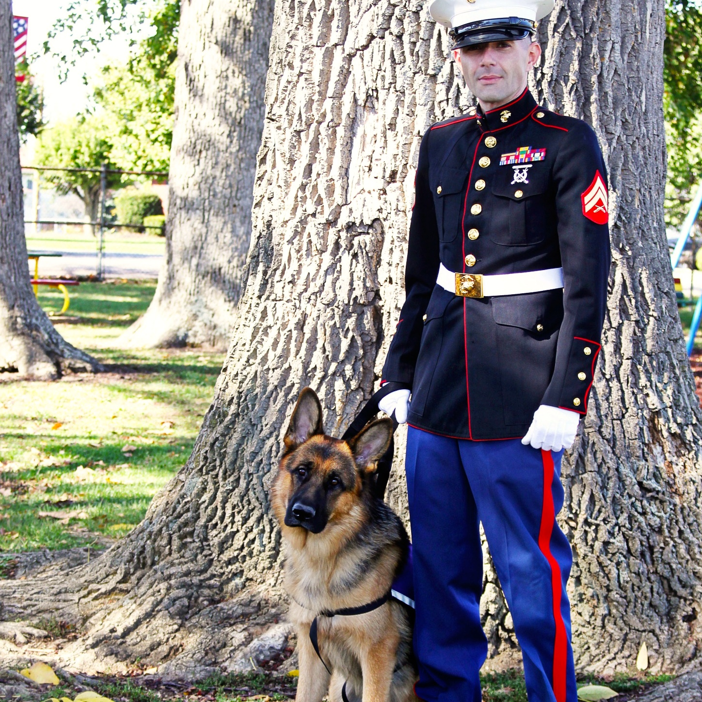 Battle Buddy: Fully Sponsor Service Dog Team for Vets Image