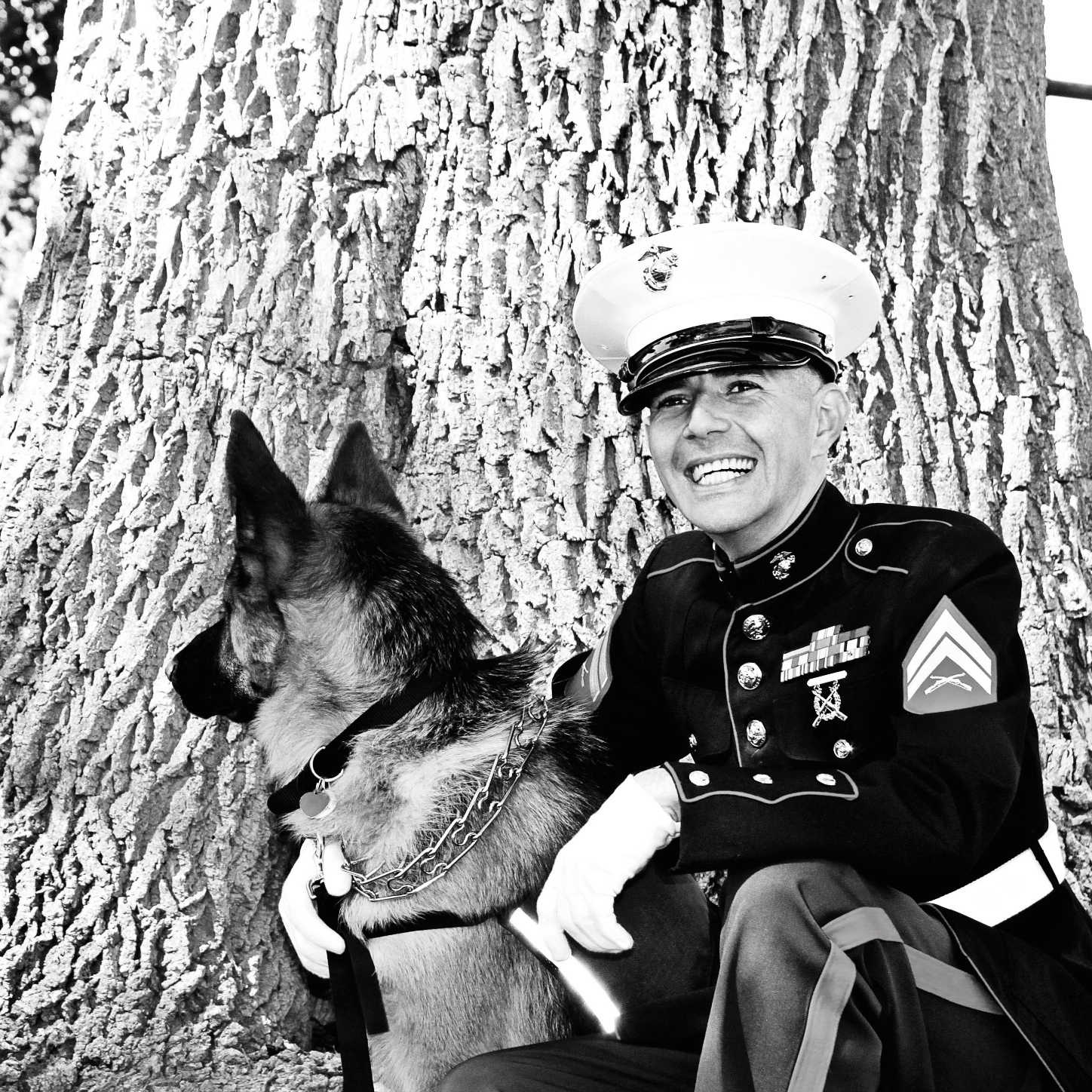 Battle Buddy: Five Service Dogs for Vets with PTSD Image